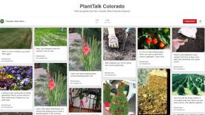 PlantTalk Pinterest