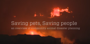 Saving pets, saving people video screen grab with fire in background