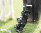 Shine prosthetic hoof