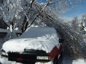 tree branches on a truck after a snowstorm