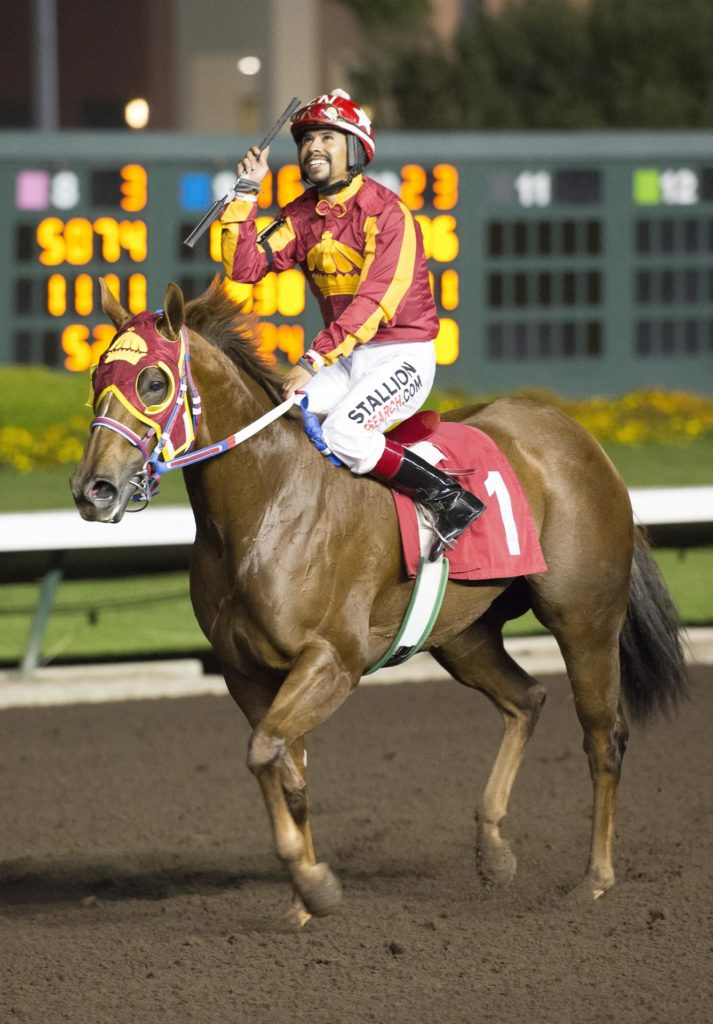 Significant Heart American Quarter Horse