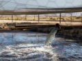 Hydraulic fracturing chemical spills on agricultural land need scrutiny, say CSU researchers