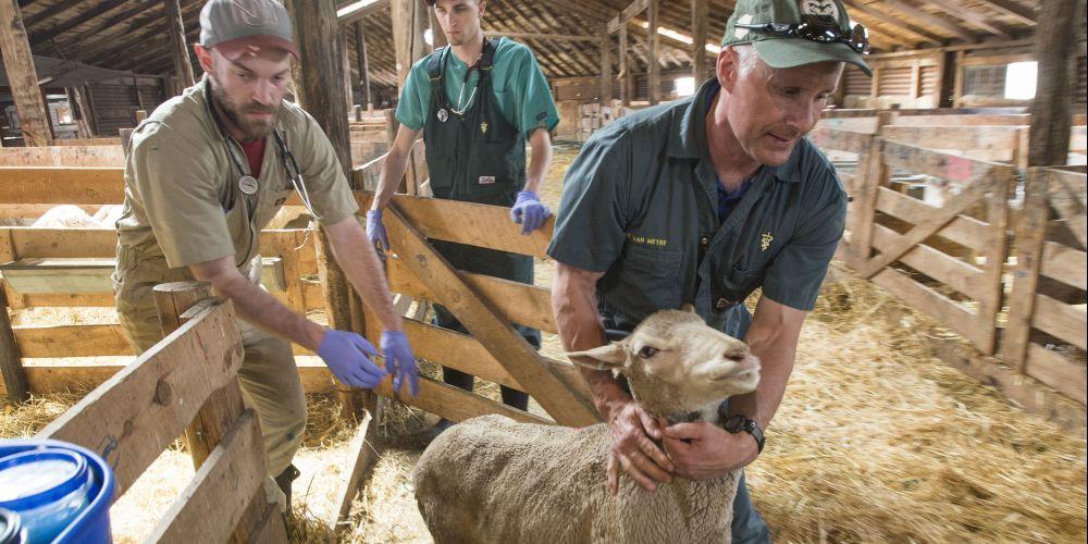 Lambulance' chasers: Veterinary team aids rangeland newborns and
