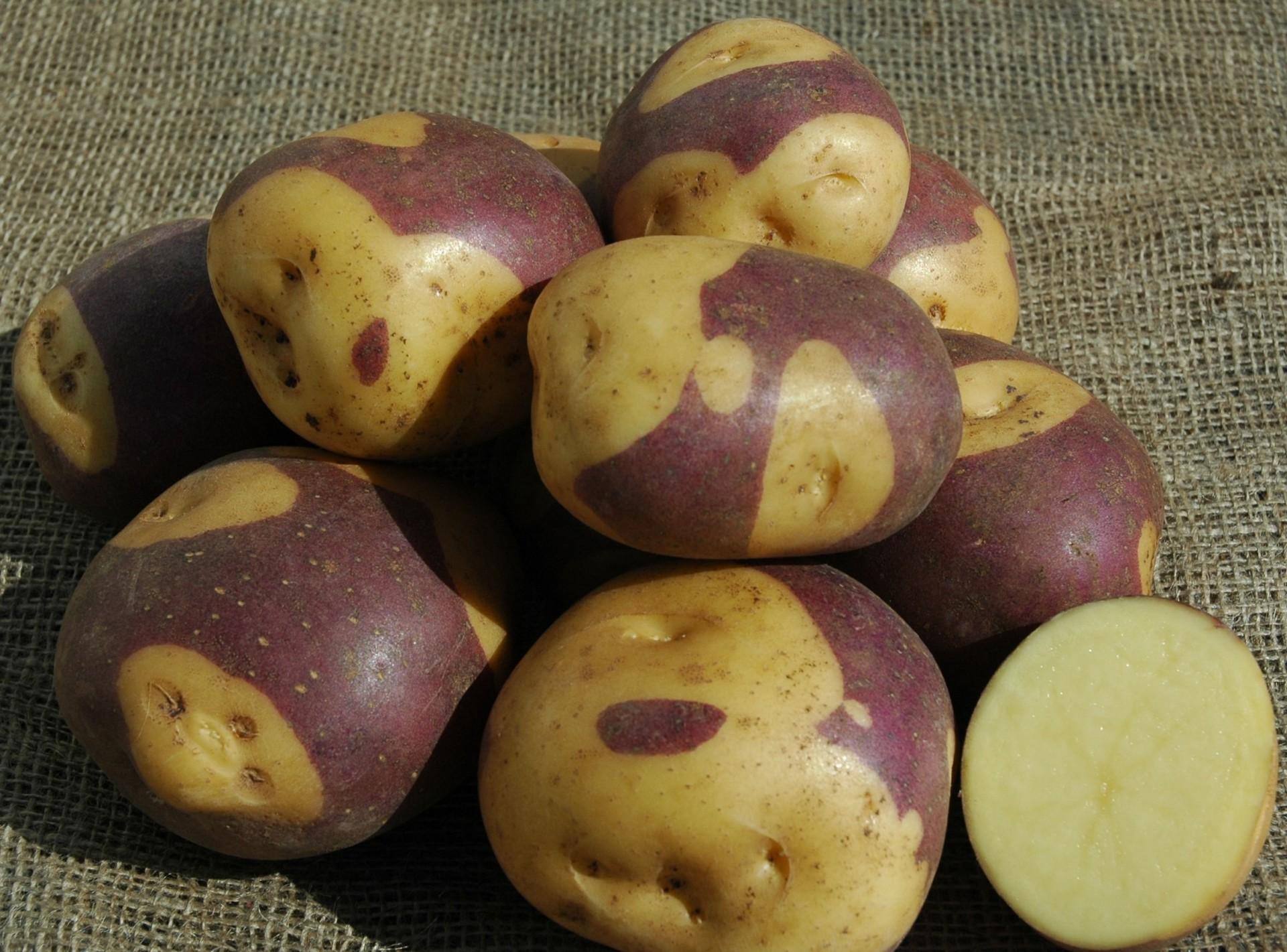 года необычные сорта картофеля фото хотя платье