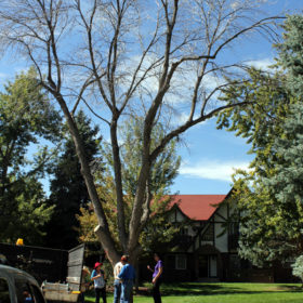 Tree Teams help homeowners learn about their landscapes