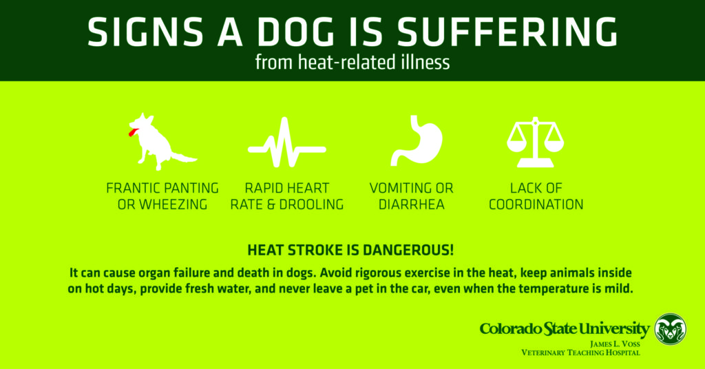 dogs heat-related illness infographic