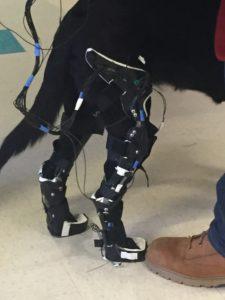canine exoskeleton