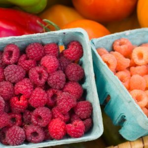 Organic raspberries grown at the Colorado State University Horticulture Research Center