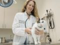 Starting from scratch: CSU veterinarian searches for answers to chronic kidney disease in cats