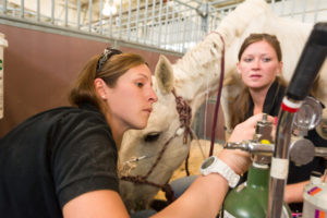CSU vet students treat High Park Fire animals