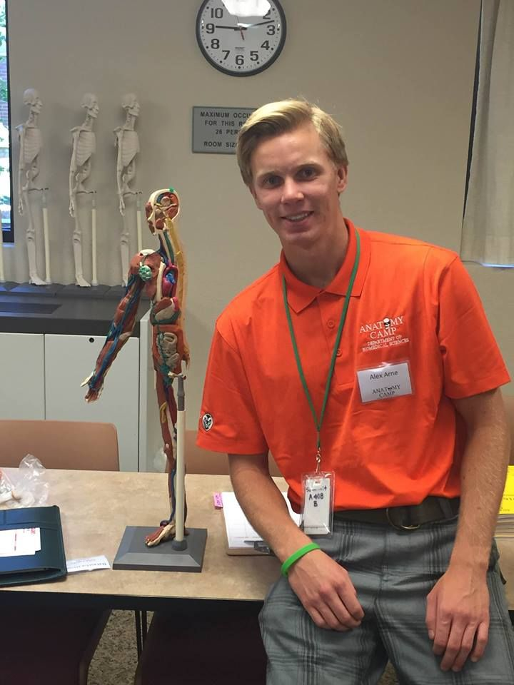 Anatomy Camp counselor Alex Arne refers to a clay model during a lesson.