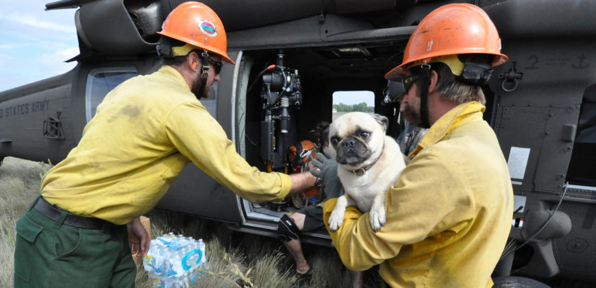 National guardsmen evacuate a dog via helicopter