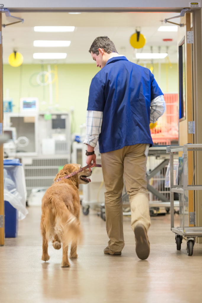 Jason Shipman, first year DVM student, walks a dog in the James L. Voss Veterinary Teaching Hospital. January 28, 2016