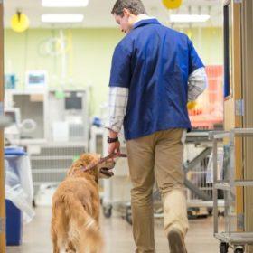 Heal thyself: Colorado State University hosts veterinary wellness summit