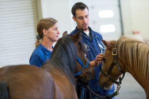 evaluating a horse at the VTH