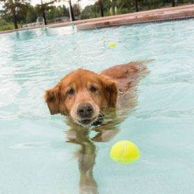 Pooch Plunge: Splish, splash, they'll be takin' a bath