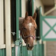 How to protect your horse from West Nile Virus infection