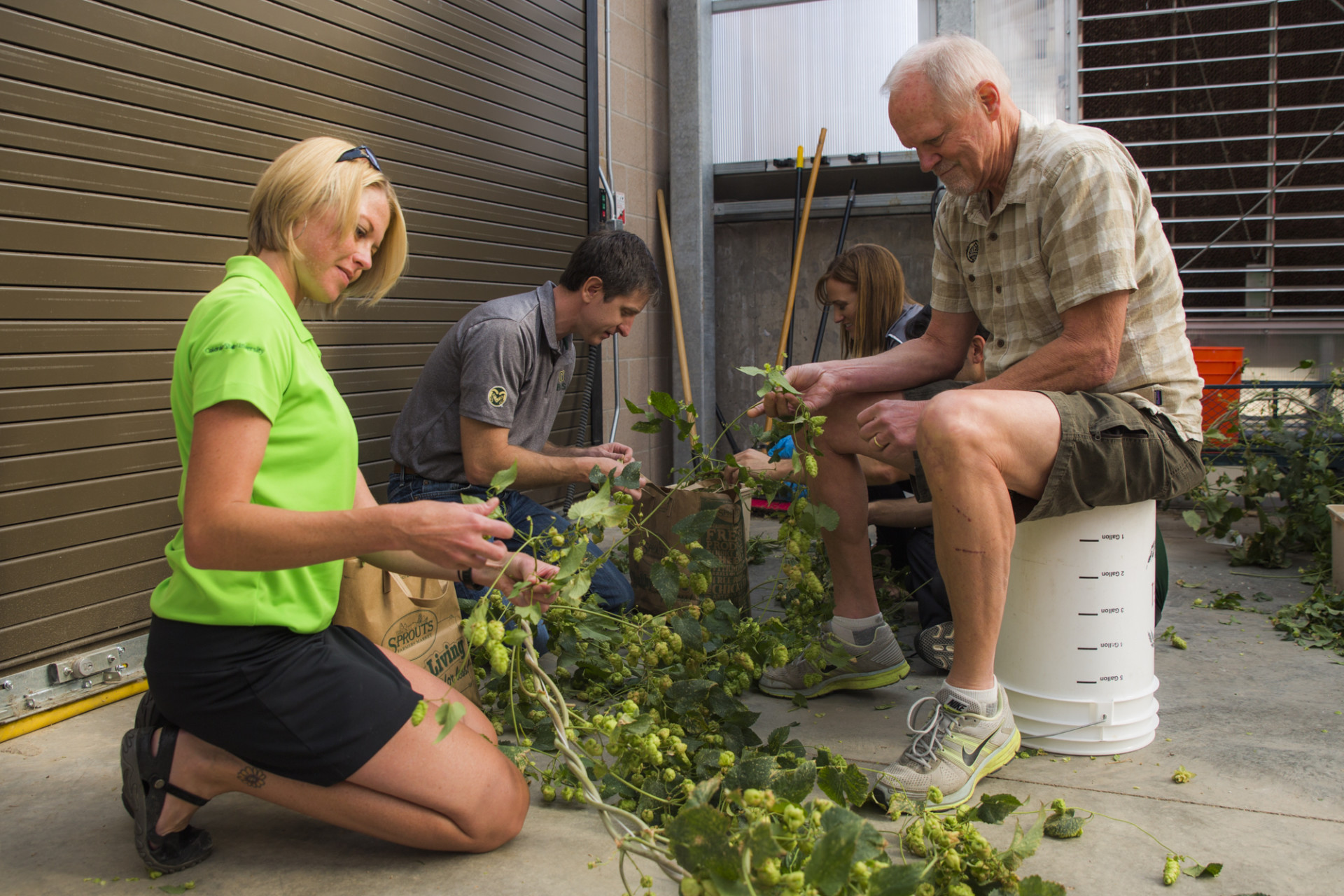 Students and Doug Odell harvest hops