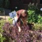 Annual harvest at Coors Field GaRden a purple affair