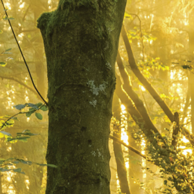 Toward a Natural Forest – Free screening and discussion