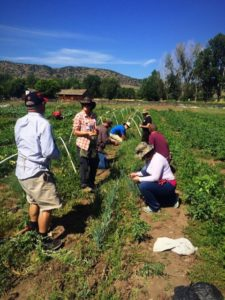 veterans-working-at-the-denver-botanic-gardens-chatfield-farm-location