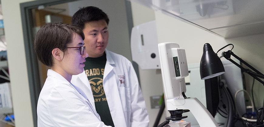 biomedical engineering students