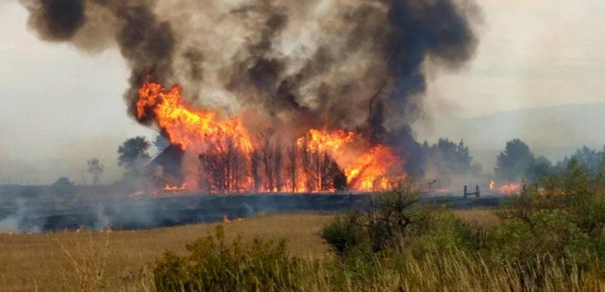 grove-of-trees-burning