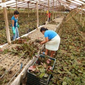 Horticulture professor brings best practices to Guatemala