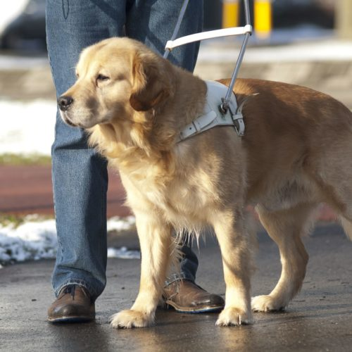 Policy on service, emotional support animal use on campus updated