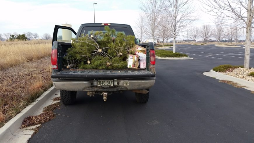 Colorado State Forest Service, NOCOShares donate Christmas trees ...