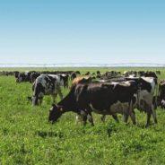 $1.4 million organic dairy grant to enhance animal care strategies
