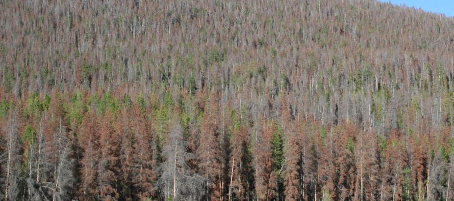 Forest health survey: 834 million standing dead trees in Colorado