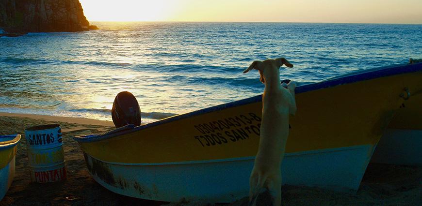 Todos_boat_dog.LEDE