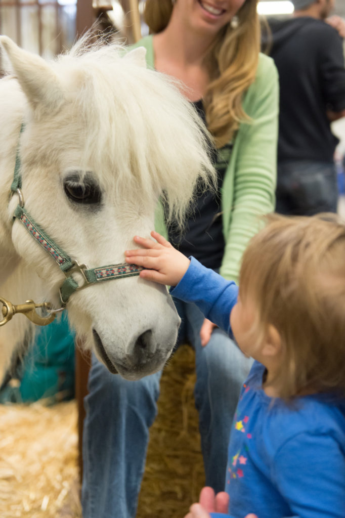 The petting zoo is a favorite stop at the Veterinary Teaching Hospital Open House. John Eisele/CSU Photography