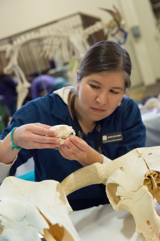 Veterinary student Madeline Anna describes bone structure and function during Open House. John Eisele/CSU Photography