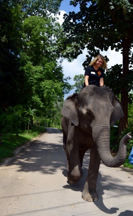 Mandi mills riding elephant