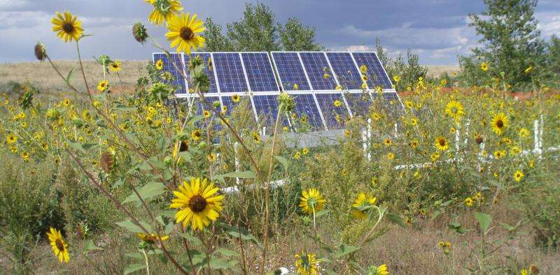 Solar array in a field surrounded by sunflowers