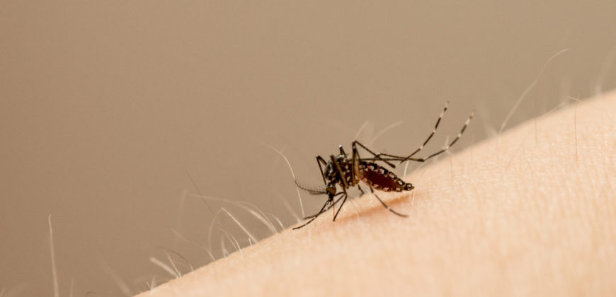 color photo of a mosquito on a woman's arm