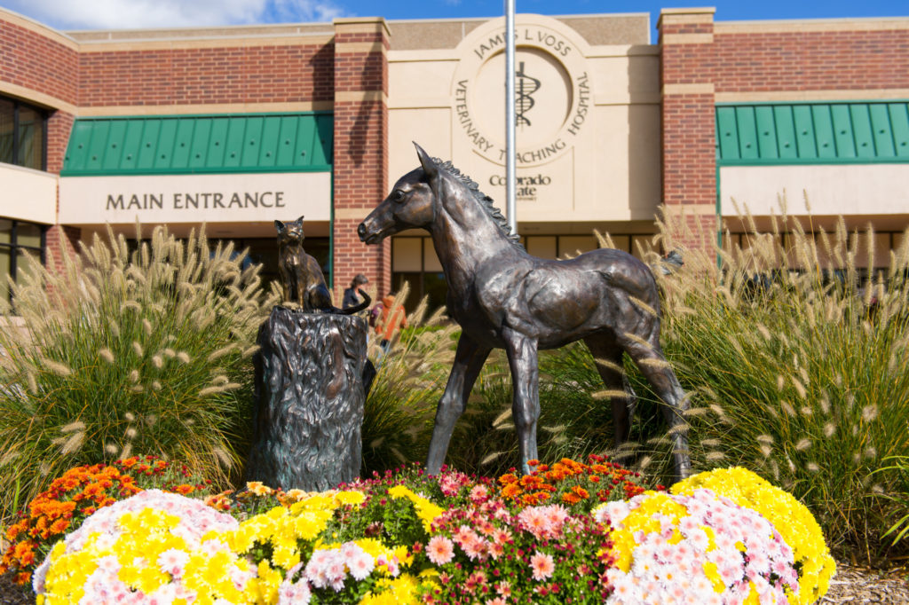 The Another Filly to Train sculpture outside the James L. Voss Veterinary Teaching Hospital, by artist Brenda Longworth, featuring a cat and foal.