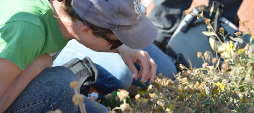 Why Learning About Native Plants Matters: Two Decades of Educational Growth
