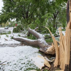 800 campus trees damaged in wake of storm