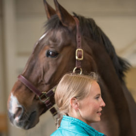 Colorado State equine veterinarians form services partnership with Cheyenne Frontier Days