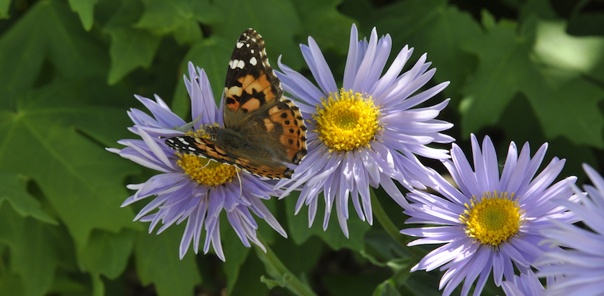 photo of flower with butterfly