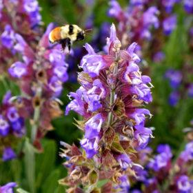 Twilight Garden Series offers three summer programs for gardeners