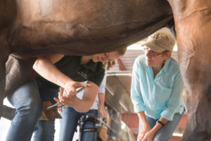 color photo of Dr. Katie Ellis treating horse Wapinitia at Cheyenne Frontier Days. Owner Elizabeth Ellis looks on.