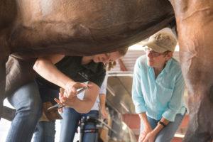 color photo of Dr. Katie Ellis treating horse Wapinitia at Cheyenne Frontier Days. Owner Elizabeth Ellis looks on.