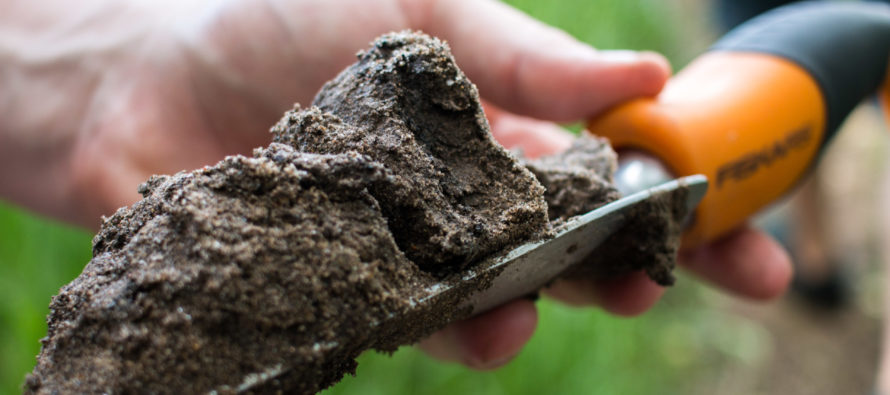 Digging into a summer of soils
