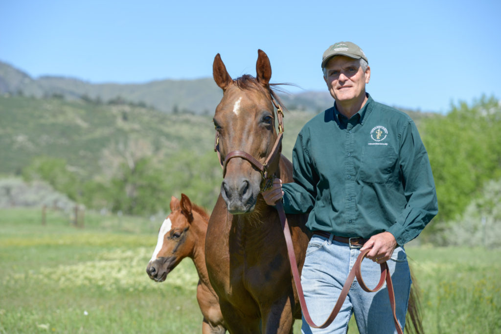 Dr. Pat McCue poses with a horse and a colt