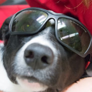 Eclipse tips: What pet owners need to know