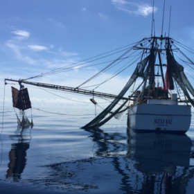 Sustainable seafood docks on CSU tables
